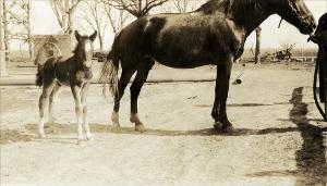 "Mare and Colt Sirred By ""Pat""   (click for a larger preview)"