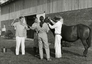 Tube Worming a Horse   (click for a larger preview)