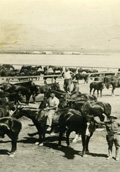 82 Field Artillery Horses   (click for a larger preview)