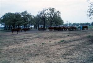 Horses in a Pasture   (click for a larger preview)
